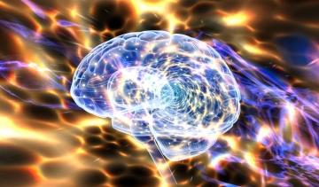 Das GEHIRN ist eine arbeitende Masse, welche von Schwingungen (Wellen) resultiert und als ein Hologramm arbeitet.