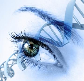 """""""Entschleiern"""" ist die Fähigkeit das System zu beurteilen und zu LESEN basierend auf der genetischen Kapazität und Datenbank einer Person."""