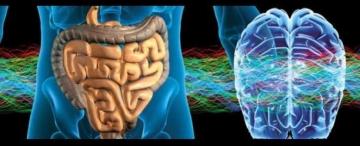 Sie verleugnen die hervorragenden und überragenden Eigenschaften ihrer eigenen Wahrheit und funktionieren nur durch den Stimulus der Neuronen in ihrem Dickdarm (das zweite Hirn) und dadurch reduzieren sie ihr Leben zum tierischen-körperlichen Zustand.