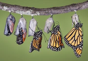 Kelebek olup, kozandan uçma şansına erişemezsen; seni ateşe atacak birileri var ötede!