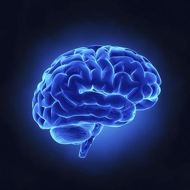 Geheimnisse Des Gehirns