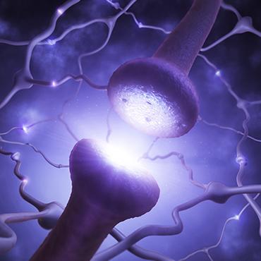 Univers de Votre Cerveau