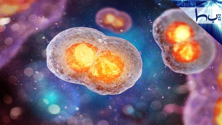 Hücrendeki İlim Ve Kudret