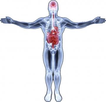 Gıdalarla vücuda giren, yenilen ve içilen nesnelerde de çoğunlukla hâkim olan enerji yükü negatiftir!
