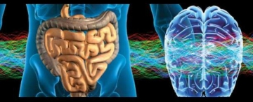 Some people deny the magnificent and superior qualities of their own reality and function only with the stimuli of the neurons in their intestines (the second brain), thereby reducing their lives to the animal – bodily state.