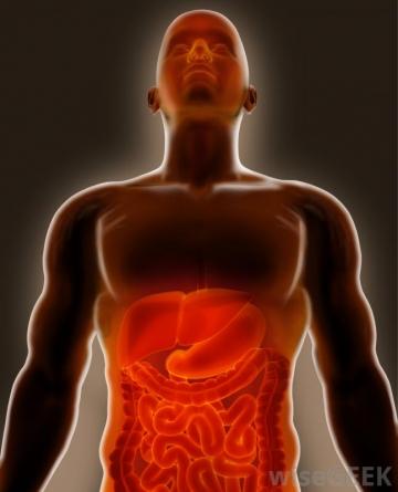 Bedensel dürtüler veya duygular, başta hormonal üretim olmak üzere, bedenin tüm biyokimyası ile çok yakından ilgilidir.