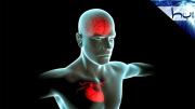 Kalp - Beyin Bağlantısı Nasıldır?