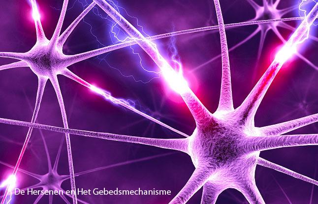 De Hersenen en het Gebedsmechanisme