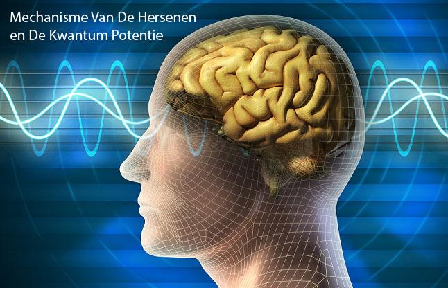Mechanisme Van De Hersenen en De Kwantum Potentie