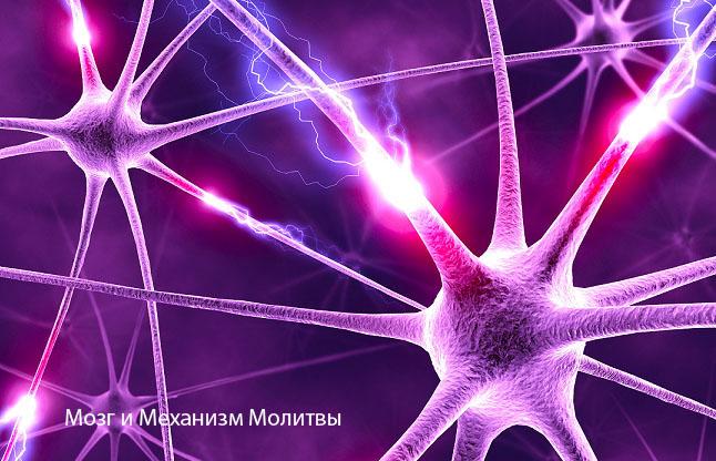 Мозг и Механизм Молитвы